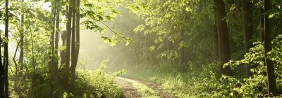 The Mystics' Path