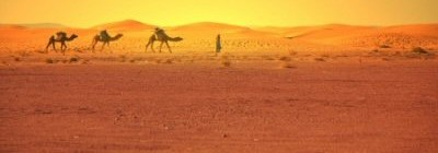 Three camels being led across the Sahara Desert.