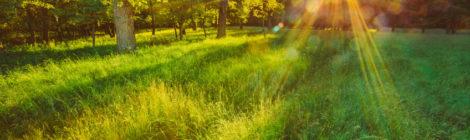 Summer Solstice: Landscapes Inner & Outer - 21/06/20