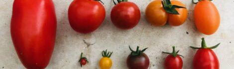 Harvest Thanksgiving: Nature's Abundance - Fair Shares For All? - 10/10/21